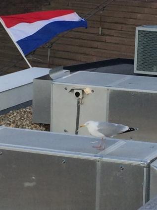 http://www.constantijnscholten.nl/files/gimgs/th-19_IMG_5379.jpg
